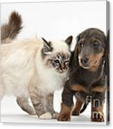 Birman Cat And Dachshund Puppy Canvas Print