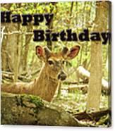 Birthday Greeting Card - Whitetail Deer Buck In Velvet Canvas Print