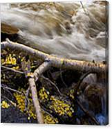 Bishop Creek-1 Canvas Print