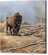 Bison And Geyser Canvas Print