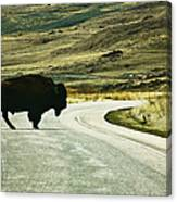 Bison Crossing Highway Canvas Print