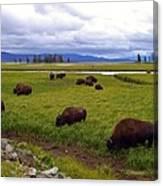 Bison-land Canvas Print