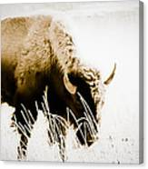 Bison Winter Canvas Print