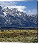 Bisons Grazing Under The Grand Tetons Canvas Print