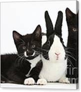 Black And Tuxedo Kittens With Dutch Canvas Print