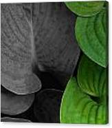 Black And White And Green Leaves Canvas Print
