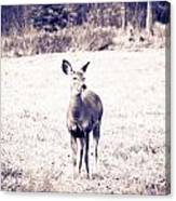 Black And White Deer Canvas Print