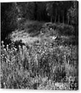 Black And White Dreams Canvas Print