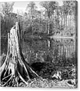 Black And White Fall Alum Creek Canvas Print