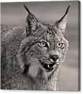 Black And White Lynx Canvas Print