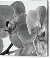 Black And White Orchid Canvas Print