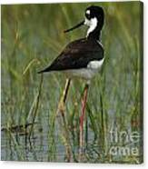 Black And White Stilt Canvas Print