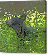 Black Bear In Green Canvas Print