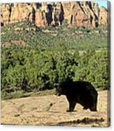 Black Bear In Utah Canvas Print