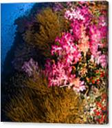 Black Coral And Soft Coral Seascape Canvas Print