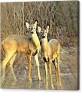 Black Ear Deer Canvas Print