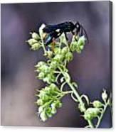 Black Flower Feeding Wasp Canvas Print