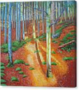 Black Forest Sunset Canvas Print