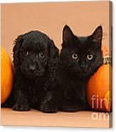 Black Kitten & Puppy With Pumpkins Canvas Print