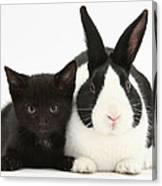 Black Kitten Dutch Rabbit Canvas Print