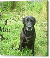 Black Lab Miss You Canvas Print