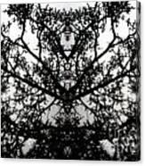 Black Mold Canvas Print