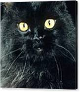 Black Persian Cat Canvas Print