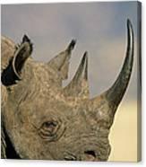 Black Rhinoceros Diceros Bicornis Close Canvas Print