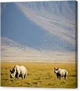 Black Rhinos Walking Across The Crater Canvas Print
