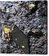 Black Rock At Graue Mill Canvas Print