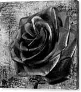 Black Rose Eternal  Bw Canvas Print