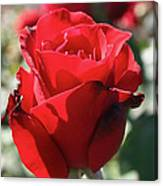 Black Rose Red Canvas Print