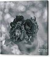 Black Rose With Bokeh Canvas Print
