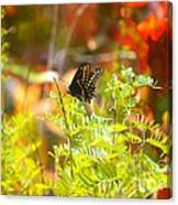 Black Swallow Tail Butterfly In Autumn Colors Canvas Print