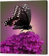 Black Swallowtail 1 Canvas Print