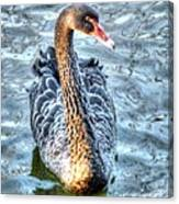 Black Swan Event Canvas Print