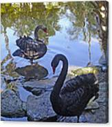 Black Swans In Tropical Garden Canvas Print