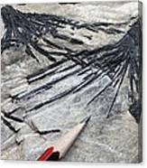 Black Tourmaline In Mica Schist Canvas Print