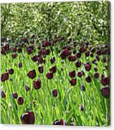 Black Tulips Canvas Print