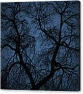 Black Veined Sky Canvas Print