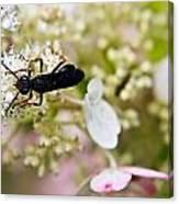 Black Wasp 2 Canvas Print
