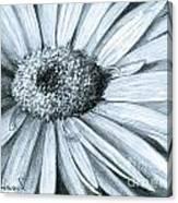 Black White Gerber Canvas Print