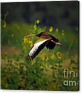 Blackbellied Whistling Duck In Flight Canvas Print