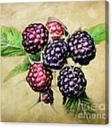 Blackberries Portrait Canvas Print