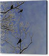 Blackbirds Canvas Print