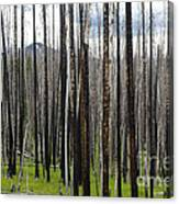 Blackened Forest  Canvas Print