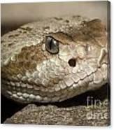 Blacktail Rattlesnake Canvas Print