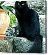 Blacky Cat Canvas Print