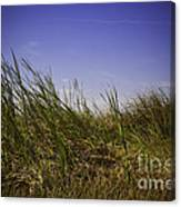 Blades Of Grass Canvas Print