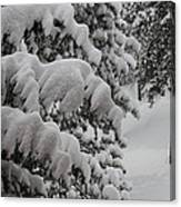 Blanket Of Snow Canvas Print